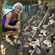 Field And Forest Products, Inc. - a Wealth of Information and Products for Growning Mushrooms