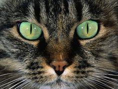 Amazing Photos of Cats-AmO Images-AmO Images