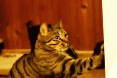 """""""And claw! And claw! And claw! Nailed it."""""""