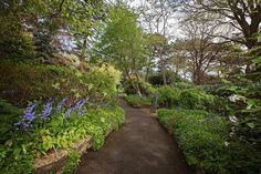 Photo of the week is from the Wooded Valley, what is your favourite #garden?