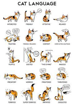 Cat Language...too cute!