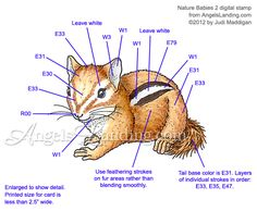 Baby Chipmunk Coloring Guide by Crafts - Cards and Paper Crafts at Splitcoaststampers