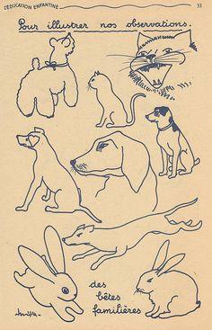 chiens et animaux familiers