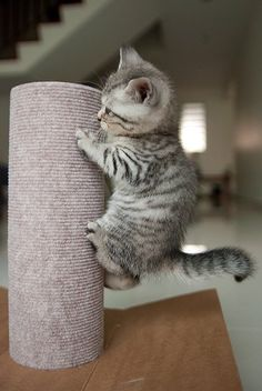 Lookie me, Mommy, I climb dis reellee taaalll thing! I at the top of dah reellee tall thing! Now, how I gonna git down?!?!