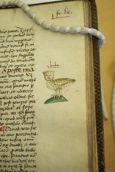 """WEIRD MEDIVAL ART Arderne engages in some Latin wordplay with this drawing of an owl. """"Bubo"""" is both the Latin word for owl, and the word to describe swelling from rectal cancer. This would help those with a knowledge of Latin find the relevant section. Medieval Books, Medieval Manuscript, Medieval Art, Illuminated Manuscript, Pope Leo, Manticore, Latin Words, Book Of Hours, Medieval Fashion"""