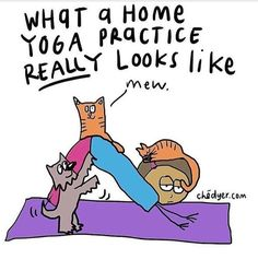 If this is what your at home yoga practice looks like, come visit us at the studio. We've got everything you need to start your weekend right 🧘🏻‍♂️🧘🏻‍♀️✌🏻 Every Friday : Yoga Basics @ with Gentle Flow @ with Partner Yoga, Home Yoga Practice, Yoga Day, My Yoga, Beginner Yoga, Yoga Poses For Beginners, Yoga Jokes, Yoga Puns, Yoga Fitness