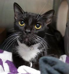 GENEVA - 16630 - - Brooklyn  *** TO BE DESTROYED 01/03/18 *** GENEVA is a sweet spayed kitty that was brought into the shelter as a stray. This lovely girl would love to start the new year in a loving home.  -  Click for info & Current Status: http://nyccats.urgentpodr.org/geneva-16630/