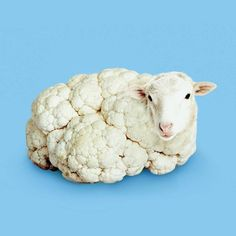 sheep / cauliflower / digital art / photoshop illustration / blue and white Photomontage, Photo Illusion, Creative Photography, Art Photography, Exposure Photography, Levitation Photography, Visual Puns, Surreal Artwork, Fantasy Kunst