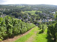 Trier (Germany) Vineyards (The mosul wine regine). Just went to a wine tasting, and I'm proud to say, I have finally found some German wine that I like.