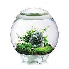 Le biOrbAIR est un terrarium entièrement automatisé qui crée et maintient un microclimat idéal pour la culture de plantes tropicales. Ce microclimat reproduit les conditions naturelles existantes sous la canopée de la forêt tropicale, ce qui permet à de nombreuses espèces de plantes, telles que les orchidées, de prospérer.