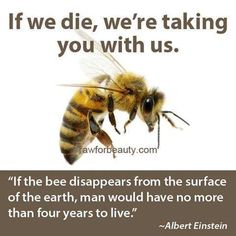 """""""If the bee disappears from the surface of the earth, man would have no more than four years to live."""" --Albert Einstein   Go organic!"""