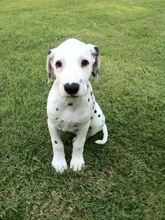 Awwwwwww Puppy.