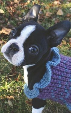 Ashton knitted Lennon a sweater. bitches love sweaters