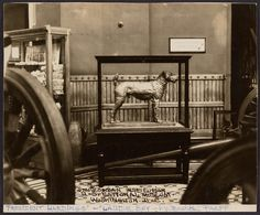 Date based on the date of President Harding's death, which inspired the commissioning of the sculpture of Laddie Boy. Laddie Boy sculpture at the Smithsonian Institution, not before 1923 / unidentified photographer.