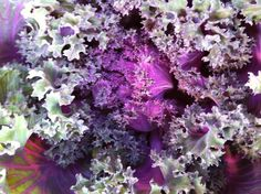 On closer inspection, a common #cabbage becomes really #extraordinary. #DetailsDetails