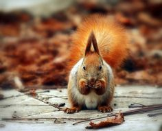 nuts by red R, via Flickr