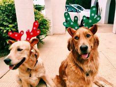 Christmas 🎄 Festive Goldens