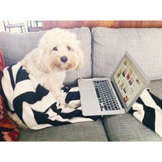 Oh you know, just pinning puppy stuff on @Pinterest!