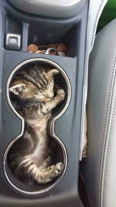 Kitty Cup Holder!!