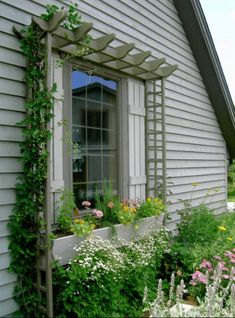 Window Flower Trough With Lattice Frame