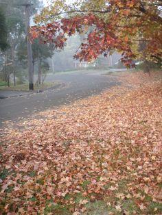 Autumn leaves, Sydney Australia Harbor City, Sydney Australia, Autumn Leaves, Country Roads, Colors, Day, Travel, Outdoor, Beautiful
