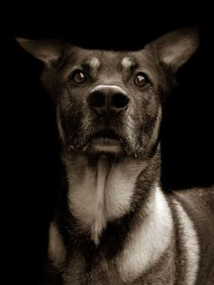 Touching Portraits Of Stray Dogs Waiting To Be Adopted | Bored Panda