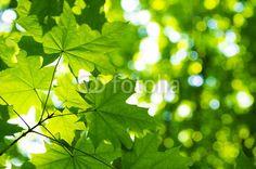 groene bladeren met zon
