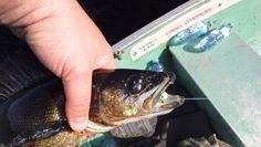 One-Man Walleye Opener Part 1 Ontario, Fishing, Adventure, Fairy Tales, Peaches, Adventure Nursery, Pisces, Gone Fishing
