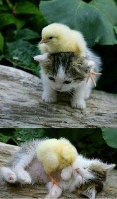 Baby animal wrestling!! <3