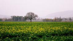 """""""Farbiger November im trüben Nebel"""" nennt Rolf Sander dieses Foto, das er in der Grohnder Feldmark aufgenommen hat."""