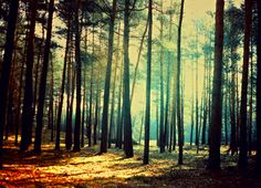 vintage forest by BaxiaArt.deviantart.com on @deviantART