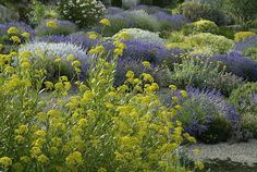 Associazione Giardino Mediterraneo - Un giardino senz'acqua