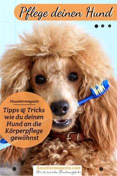 Bürsten, Kämmen, Krallen schneiden... leider alles Themen die bei vielen Hunden zum echten Problem werden können. Wie du deinen Hund an eine regelmäßige Pflege gewöhnst, verraten wir dir hier:    #htm #hund #bürsten #krallenschneiden #hundeliebe #hundestyling #dogstyling Tricks, Rat, Short Haired Dogs, Dog Things, Dog Accessories, Vet Office, Pooch Workout, Rats, Computer Mouse