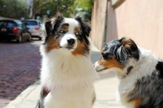Cooper & Bella #spring