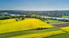 Vineyard, Golf Courses, Outdoor, Pictures, Regensburg, Outdoors, Vine Yard, Vineyard Vines, Outdoor Games