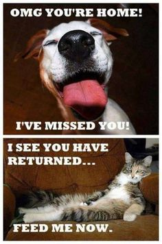 the difference between cats and dogs. And this is why we all love dogs.