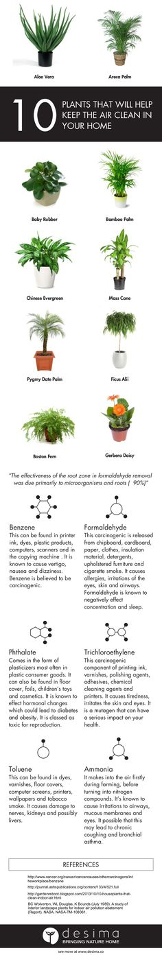Give your family a healthier home with these 10 plants.