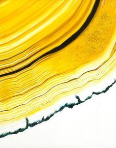 Mellow yellow. Xk