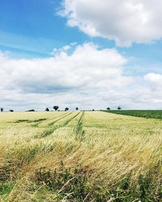 See this Instagram photo by Holly Becker @decor8 • German Countryside wheatfields
