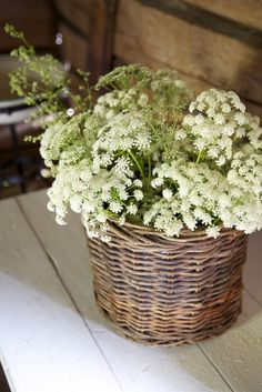 Queen Anne's Lace makes a lovely basket of flowers for a garden party Fresh Flowers, White Flowers, Beautiful Flowers, Tiny Flowers, Flowers Garden, Queen Anne Lace, Cow Parsley, Deco Nature, Deco Floral