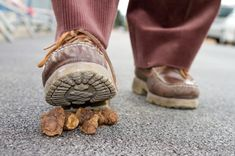 Ever stepped on poop? Don't fret, there's a chance that you might actually be lucky. The consider it bad luck to step in dog poop with your right foot, but good luck if it's your left. Wd 40, Animal Control, Dna Test, Clean Up, Helpful Hints, Handy Tips, Life Hacks, The Incredibles, Fancy