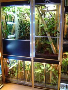 - Page 7 Tree frogs and crested cages Gecko Terrarium, Reptile Terrarium, Reptile Room, Reptile Cage, Reptile Pets, Chameleon Enclosure, Reptile Enclosure, Cute Reptiles, Reptiles And Amphibians