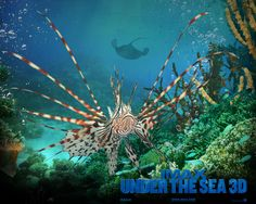 32 best under the sea images on Pinterest   Marine life  Ocean     Desktop Wallpapers Bollywood HD Most Beautiful Free Wallpapers