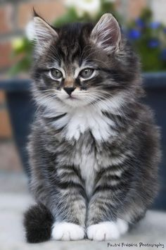 9 Tips For Choosing The Best Cat Urine Cleaner Cute Baby Cats, Cute Funny Animals, Cute Baby Animals, Funny Cats, Kittens And Puppies, Cute Cats And Kittens, Kittens Cutest, Puppies Stuff, Pretty Cats
