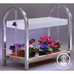 Indoor plant stand with fluorescent lighting. Excellent for African Violets, herbs, lettuce, starting seedlings. Growing Wheat Grass, Indoor Gardening Supplies, Fairy Garden Plants, Herb Garden, Sprouting Seeds, Garden Tool Set, Garden Ideas, Grow Lights For Plants, Grow Kit
