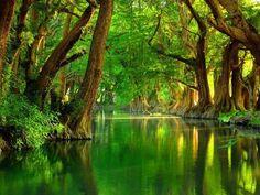 Lovely green swamp.
