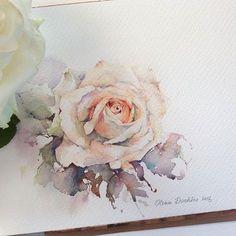 best Olena Duchene images by Ayako M on . Watercolor Rose, Watercolor Cards, Watercolor Illustration, Watercolour Painting, Painting & Drawing, Watercolors, Art Aquarelle, Watercolour Tutorials, Arte Floral