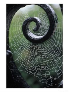 Spiders are AMAZING architects!