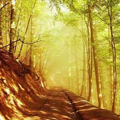 Таємничий карпатський ліс. Боржава Україна. Carpathians Ukraine. #карпати #боржава #україна #carpathians #karpaty #mountains #forest #survival #sky #countryside #sunset #landscape #vscocam #vscoeurope #vscoukraine #hiking #camping #nature #wilderness #tripadvisor #travel #roadtrip #adventure #explore #earth #natureofukraine  #mountainscape #sunrise #goldenhour #like4like by olgaprystai