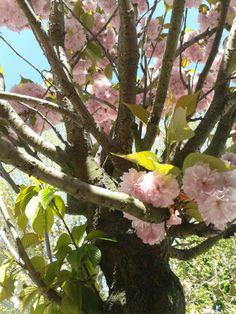 spring radosc zycia